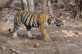 places to see near khajuraho Panna National Park
