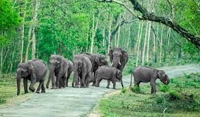 places to visit near Mysore - Bandipur National Park