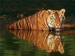 tourist places to visit near agra - Van Vihar wildlife sanctuar