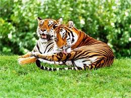 Bhalukpong Sightseeing, Tourist Places to visit in Bhalukpong - Tiger Reserve