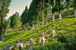 Rungli Rungliot Village in Darjeeling, West Bengal