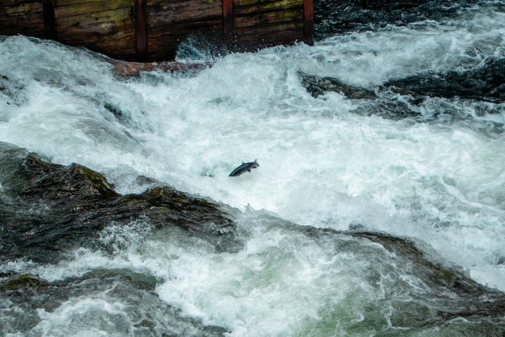 Russian River, Kenai Peninsula