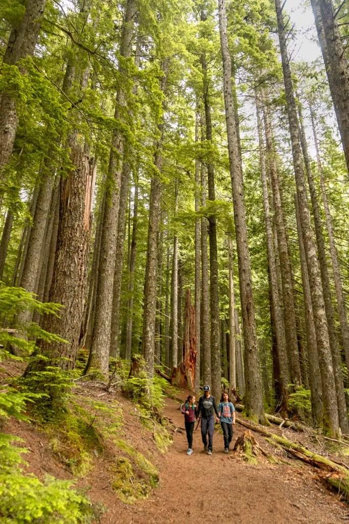 Trail of the Cedars near Longmire