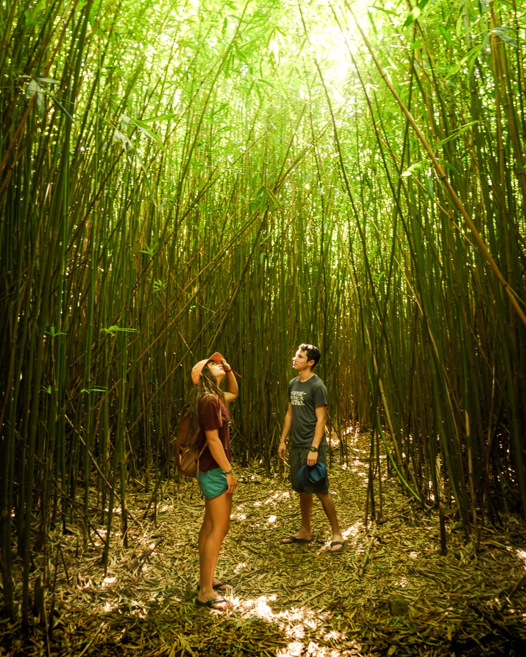 Bamboo Forest, Road to Hana, Maui