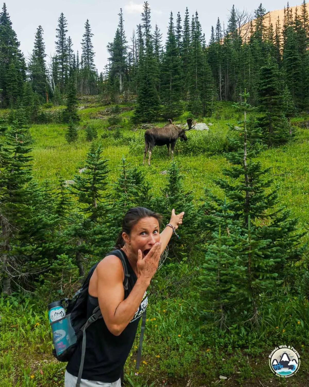 Many Glacier Moose Sighting