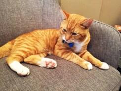 Fancy Kittie Crumbs & Whiskers Cat Cafe