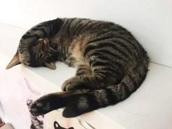 Sleepy Kittie Crumbs & Whiskers Cat Cafe