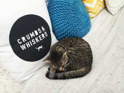 Crumbs & Whiskers Cat Cafe
