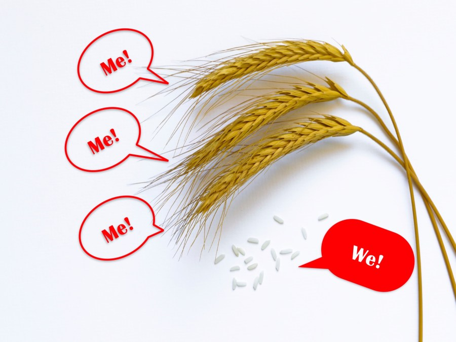"Wheat stalks and rice grains saying they are a ""Me"" culture or a ""We"" culture respectively"