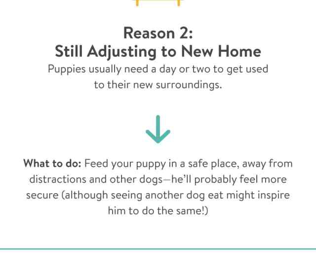 Reasons Why Your Puppy Is Not Eating