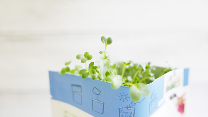 Gift-A-Green Urban Cultivator Growing Micro Greens Postcard Instanomss Nomss Food Photography Healthy Travel Lifestyle Canada