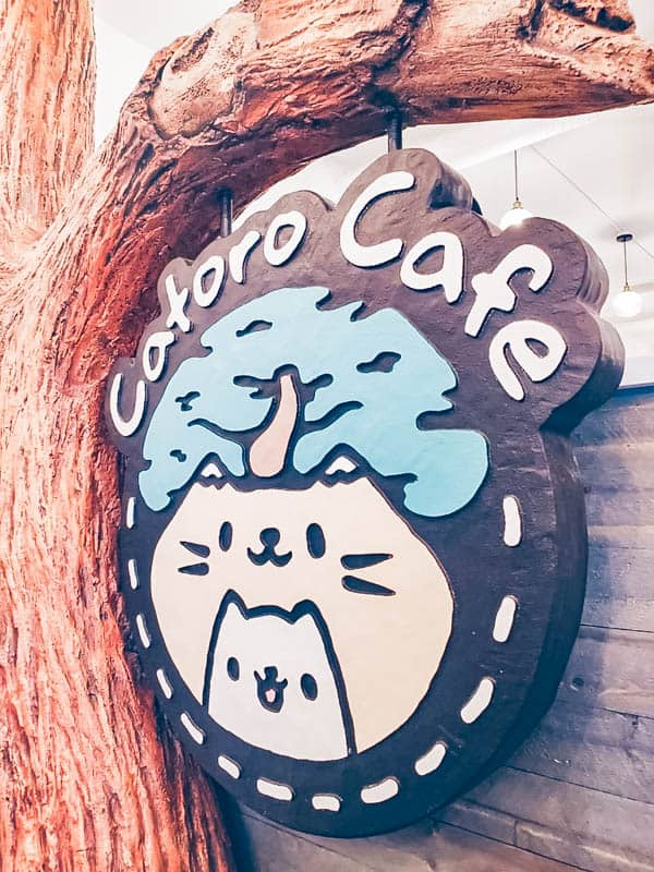 Catoro Cafe | Cat Cafe in Vancouver