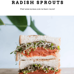 SMOKED SALMON SPROUTS SANDWICH
