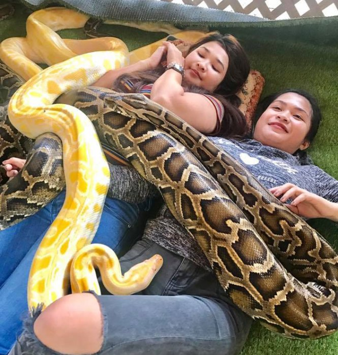Guests enjoy the snake massage in Kalibo Ostrich Farm.