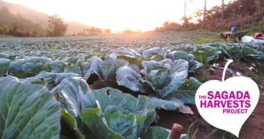 The Sagada Harvests Project