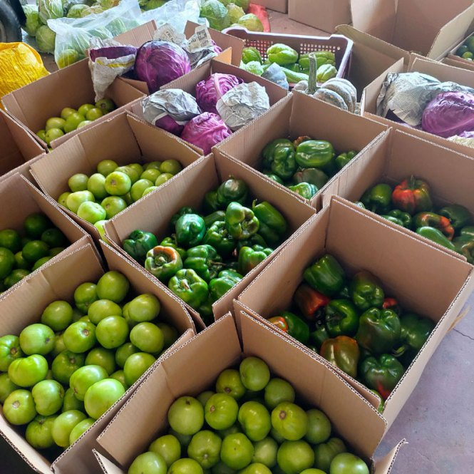 Buy Vegetables from Sagada