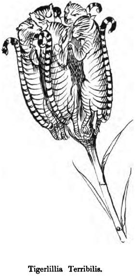 tigerlilia