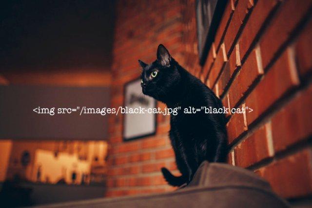 Image SEO example - black cat photo