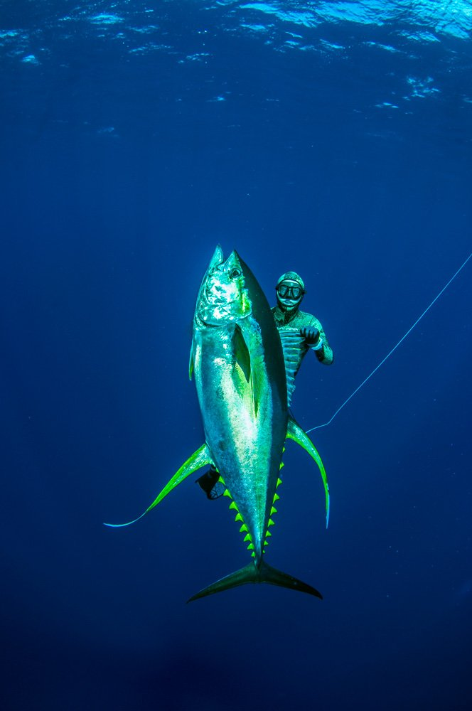 Ascension Island Spearfishing Coatesmans Spearfishing Safaris