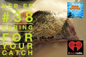 Caring For Your Catch. Noob Spearo Spearfishing Community