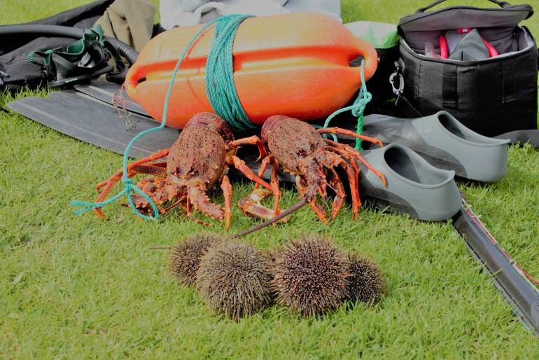 Taranaki Spearfishing and Crayfish