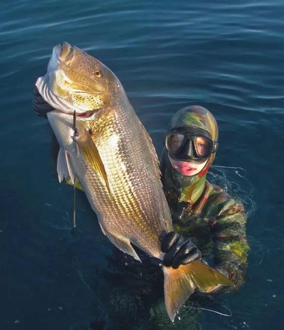 Spearfishing Dentex Kevin Daly
