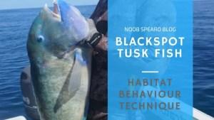 black spot tusk fish larry gray