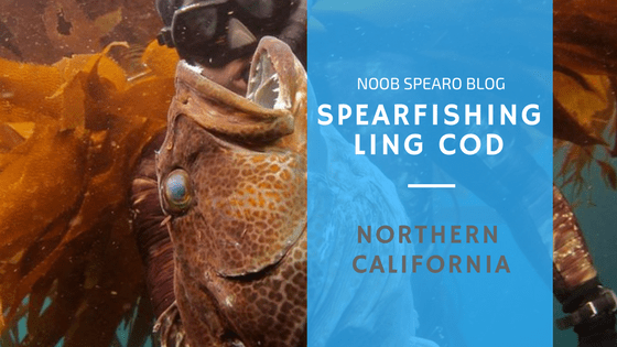 Spearfishing Northern California