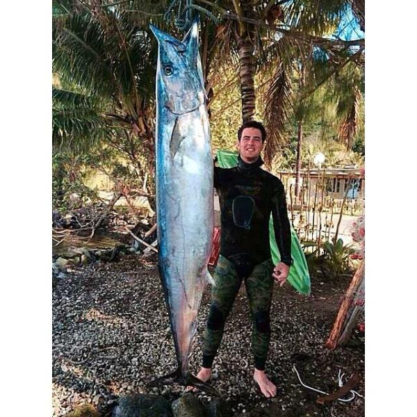 John Pengelly Wahoo Spearfishing World Record 62.6kg or 137 lbs