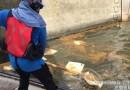 高雄愛河出現死魚與油污 網酸:各媒體不報了?
