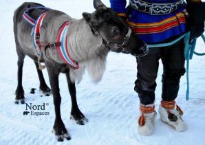 Blog - Sur les traces des Sami de Finlande | Nord Espaces