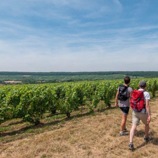 Wandern in den Weinbergen in Trélou-sur-Marne