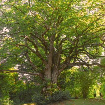 Wald in Compiègne