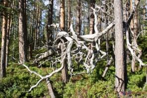 ...der Wald dichter.