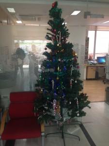 unser Baum im Institut