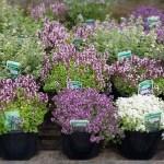 large-herbs-tile