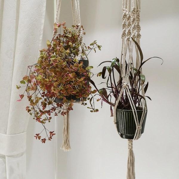 to hængeplanter