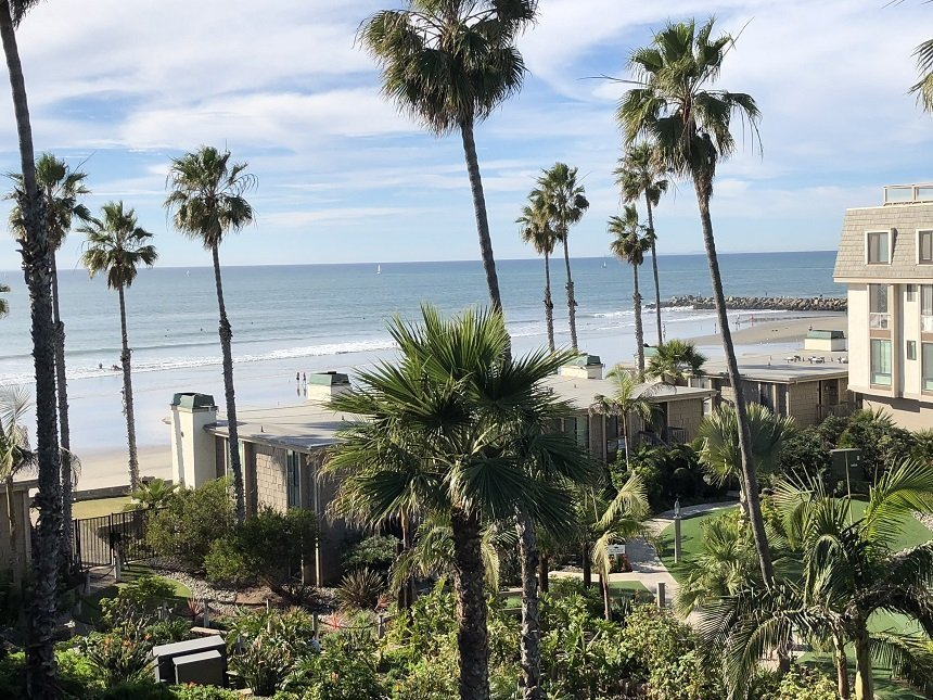 pacific ocean and palm tree views from unit D305