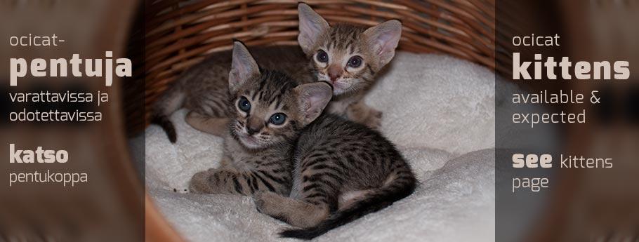 Northalla pentukoppa   Northalla kittens at the moment