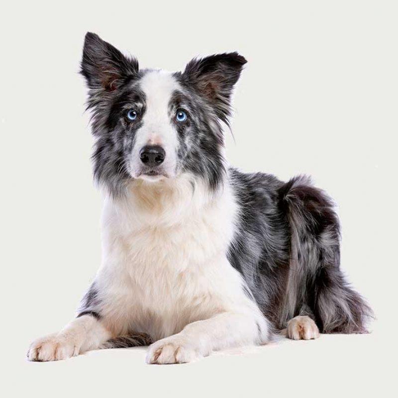 How Accomplish An click here individual Use up A good Dog?