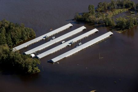 Flooded poultry farm in Eastern NC post Matthew. Image courtesy NC Waterkeeper Alliance