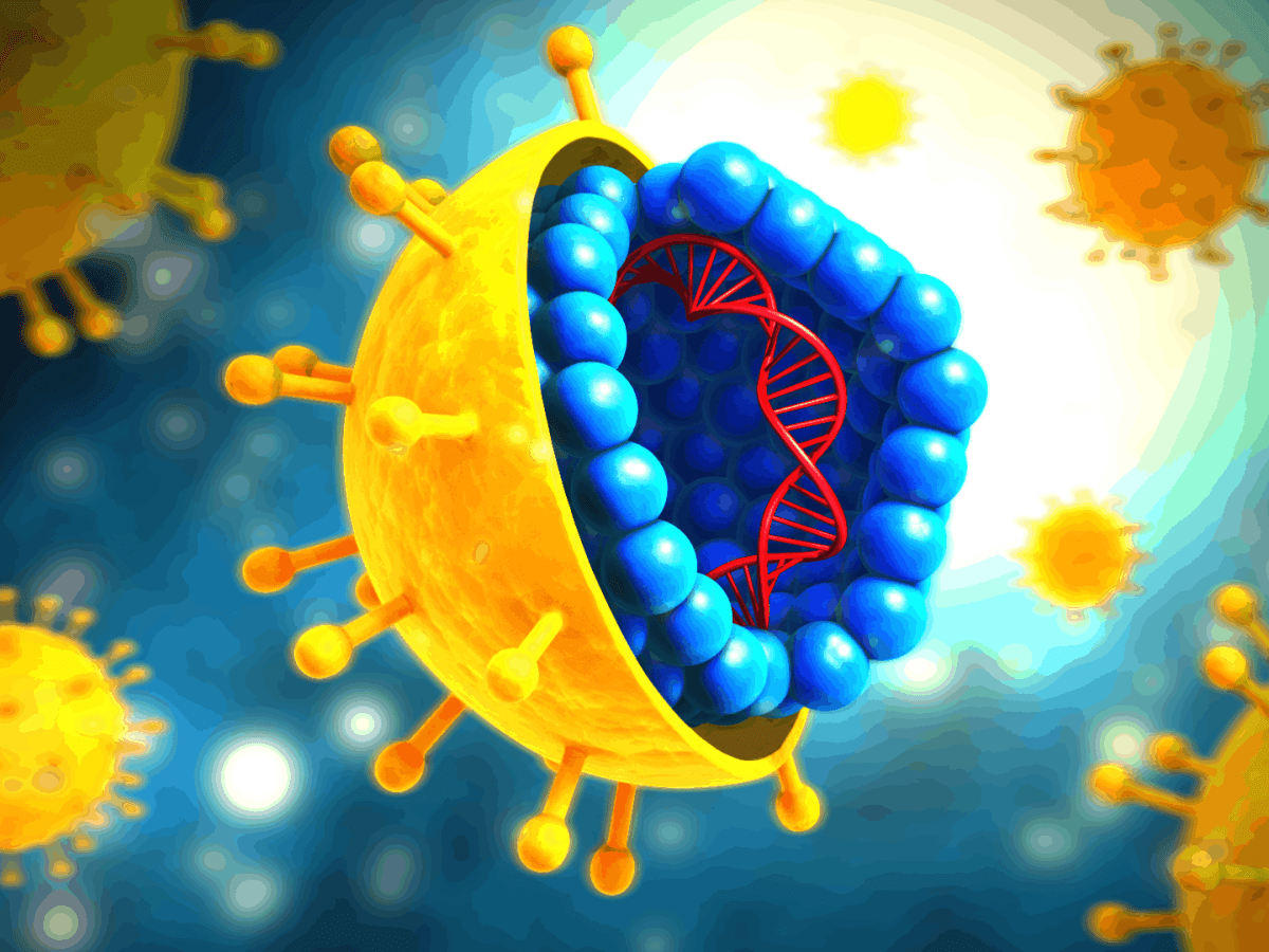 illustrated graphic showing the interior structure of HCV along with how the surface appears