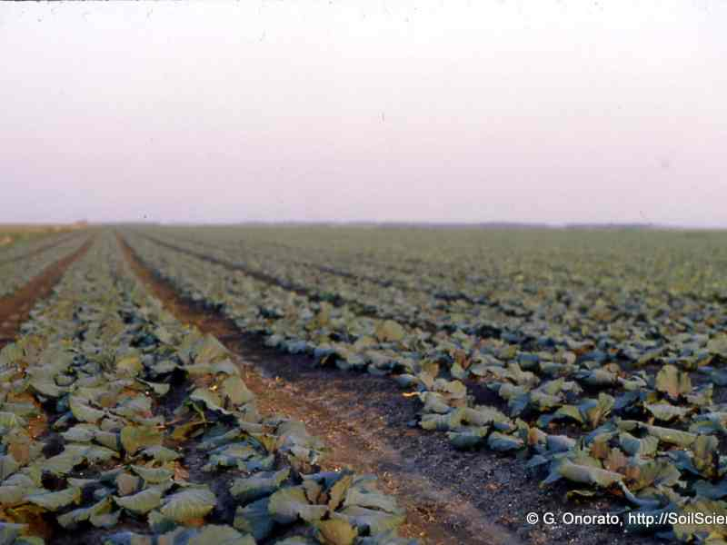 shows a cabbage field extending off into the distance. Farmers are some of the people who could benefit from association health plans