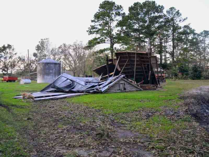 A collapsed barn with trees behind it and a yellow lab to the left of the photo