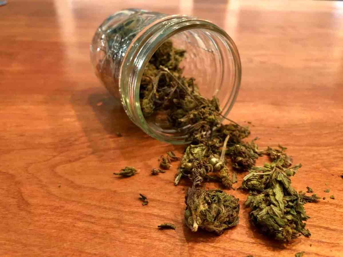 shows hemp flowers in a jar