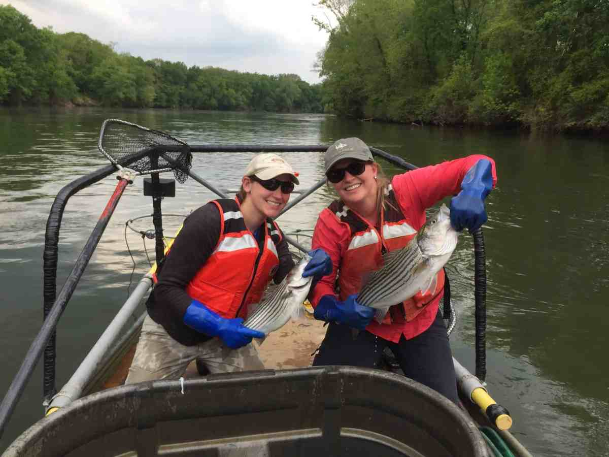 Study co-authors Tiffany Penland (left) and Casey Grieshaber gather fish from the Pee Dee River to test tissue for the presence and abundance of PFAS. Photo credit: N.C. State