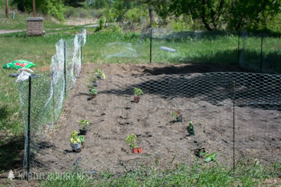 vegetable garden with chicken wire fence