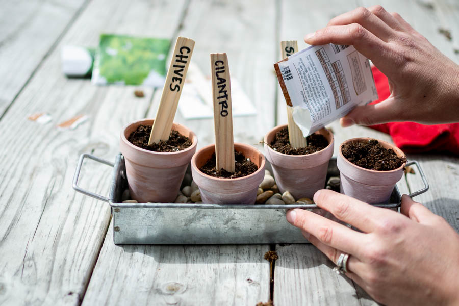 pouring herb seeds in planters for DIY herb garden