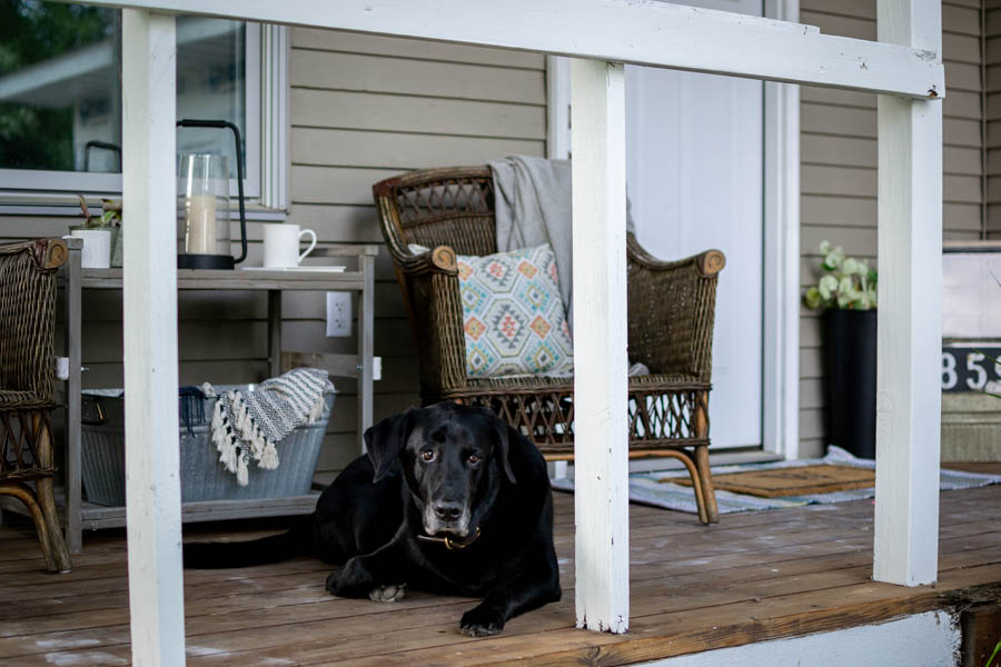 black lab laying on summer front porch
