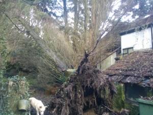 Fallen tree next to house.